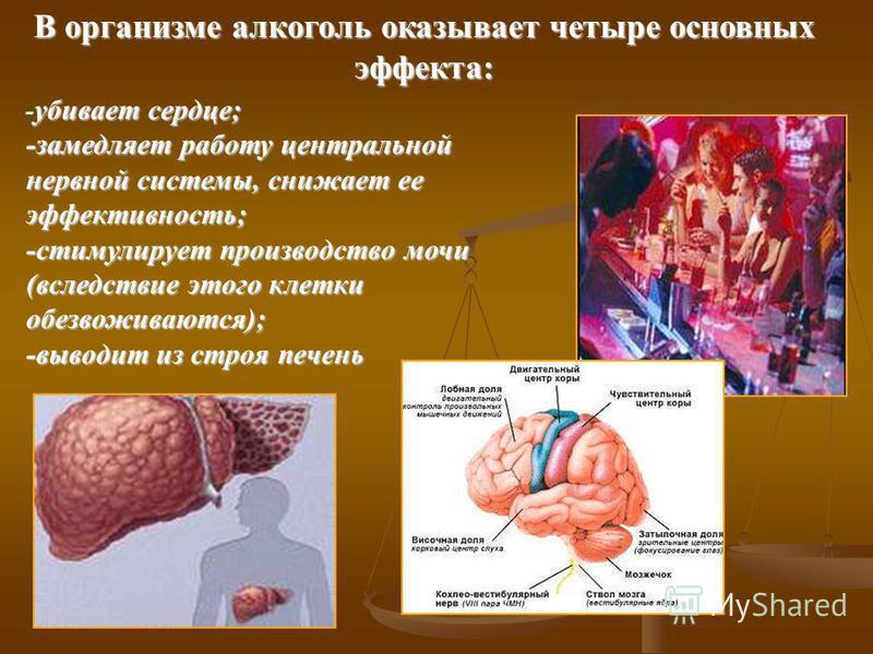 В организме алкоголь оказывает четыре основных эффекта: убивает сердце; - убивает сердце; -замедляет работу центральной нервной системы, снижает ее эффективность; -стимулирует производство мочи (вследствие этого клетки обезвоживаются); -выводит из ст