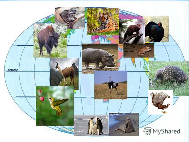 1 ряд – Северная и Южная Америка 2 ряд – Африка и Австралия 3 ряд – Евразия и Антарктида 1 ряд – Северная и Южная Америка 2 ряд – Африка и Австралия 3 ряд – Евразия и Антарктида