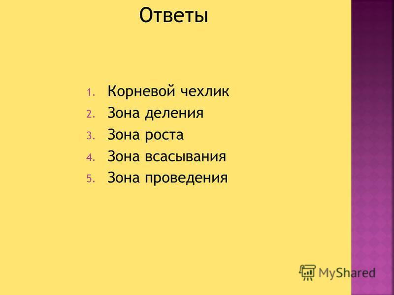 1. Корневой чехлик 2. Зона деления 3. Зона роста 4. Зона всасывания 5. Зона проведения Ответы