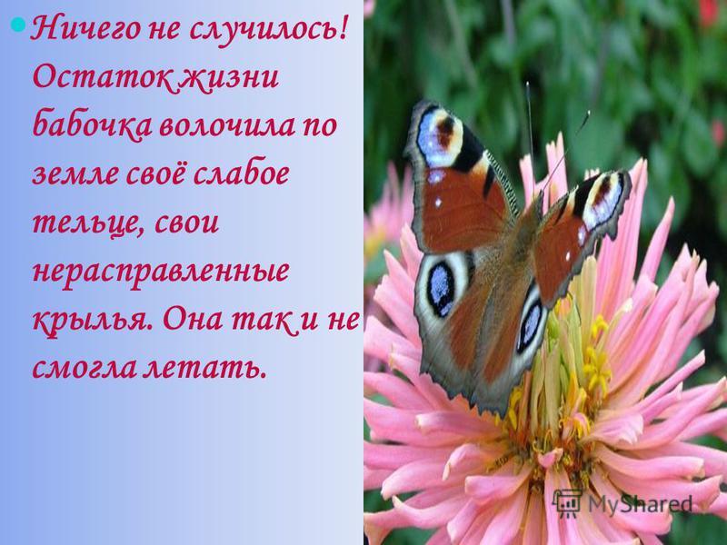 Ничего не случилось! Остаток жизни бабочка волочила по земле своё слабое тельце, свои не расправленные крылья. Она так и не смогла летать.