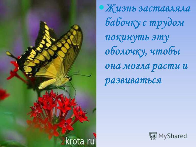 Жизнь заставляла бабочку с трудом покинуть эту оболочку, чтобы она могла расти и развиваться