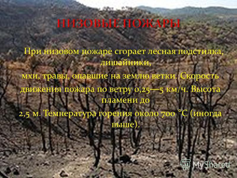 При низовом пожаре сгорает лесная подстилка, лишайники, мхи, травы, опавшие на землю ветки. Скорость движения пожара по ветру 0,25 5 км/ч. Высота пламени до 2,5 м. Температура горения около 700 °C (иногда выше).