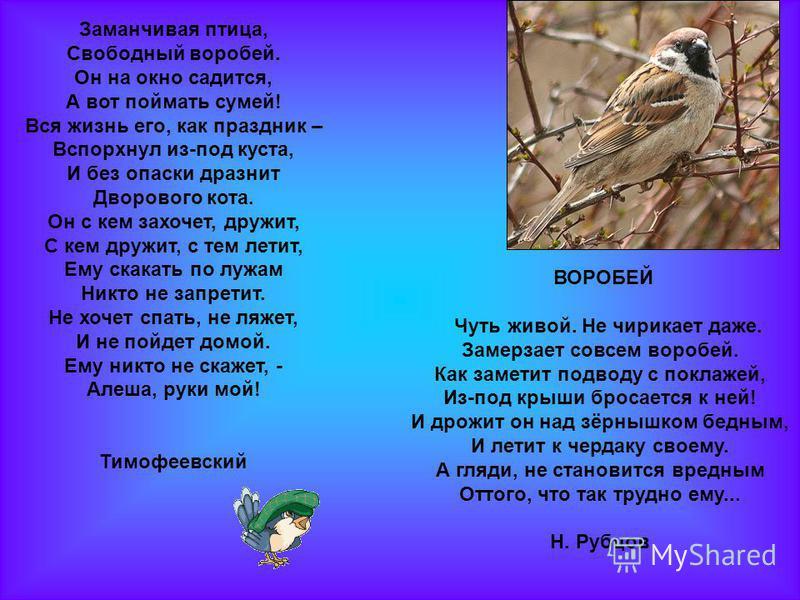Заманчифая птица, Свободный воробей. Он на окно садится, А вот поймать сумей! Вся жизнь его, как праздник – Вспорхнул из-под куста, И без опаски дразнит Дворового кота. Он с кем захочет, дружит, С кем дружит, с тем летит, Ему скакать по лужам Никто н
