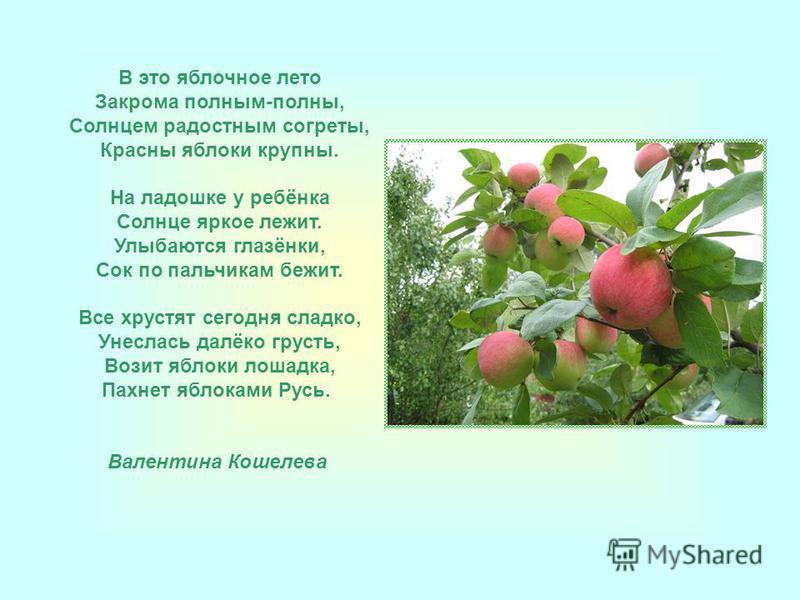 В это яблочное лето Закрома полным-полны, Солнцем радостным согреты, Красны яблоки крупны. На ладошке у ребёнка Солнце яркое лежит. Улыбаются глазёнки, Сок по пальчикам бежит. Все хрустят сегодня сладко, Унеслась далёко грусть, Возит яблоки лошадка,