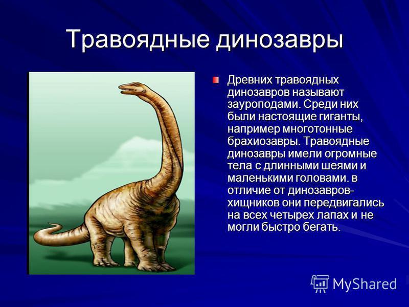 Древних травоядных динозавров называют зауроподами. Среди них были настоящие гиганты, например многотонные брахиозавры. Травоядные динозавры имели огромные тела с длинными шеями и маленькими головами. в отличие от динозавров- хищников они передвигали