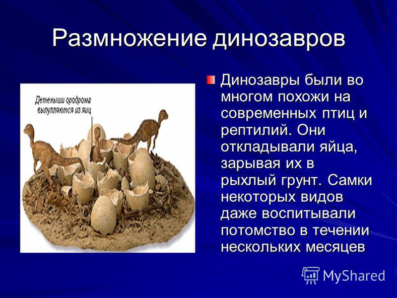 Размножение динозавров Динозавры были во многом похожи на современных птиц и рептилий. Они откладывали яйца, зарывая их в рыхлый грунт. Самки некоторых видов даже воспитывали потомство в течении нескольких месяцев