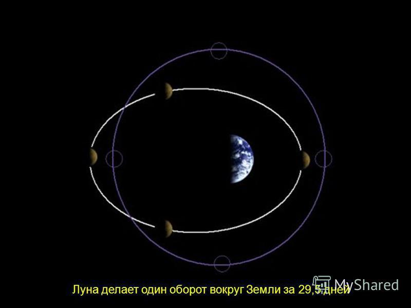 Орбита Луны. Фазы Луны. Луна делает один оборот вокруг Земли за 29,5 дней