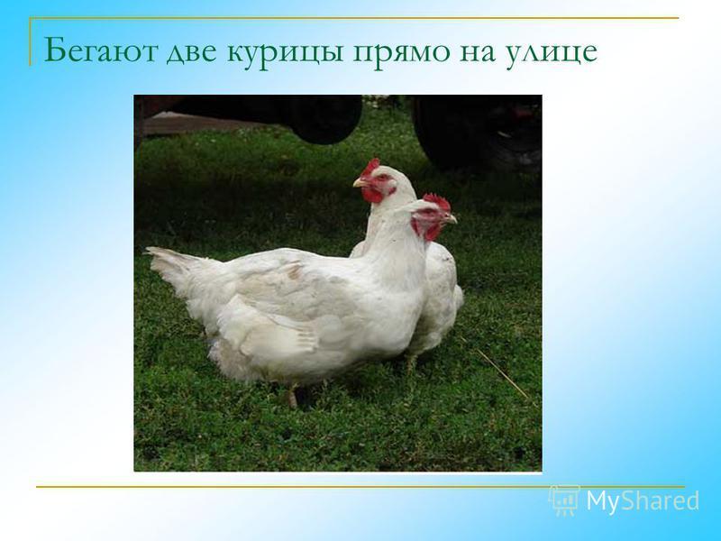 Бегают две курицы прямо на улице