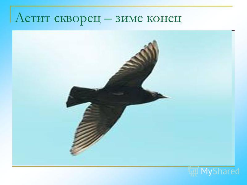 Летит скворец – зиме конец
