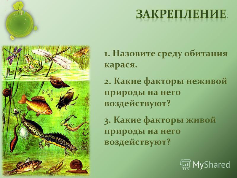 1. Назовите среду обитания карася. 2. Какие факторы неживой природы на него воздействуют? 3. Какие факторы живой природы на него воздействуют?