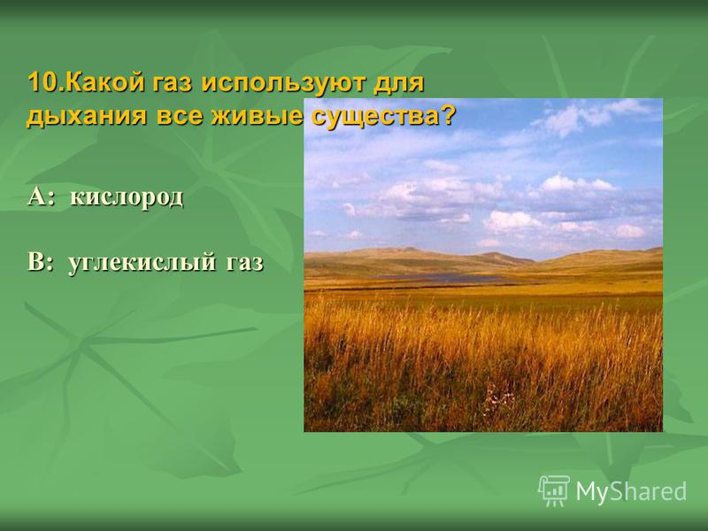 10. Какой газ используют для дыхания все живые существа? А: кислород В: углекислый газ