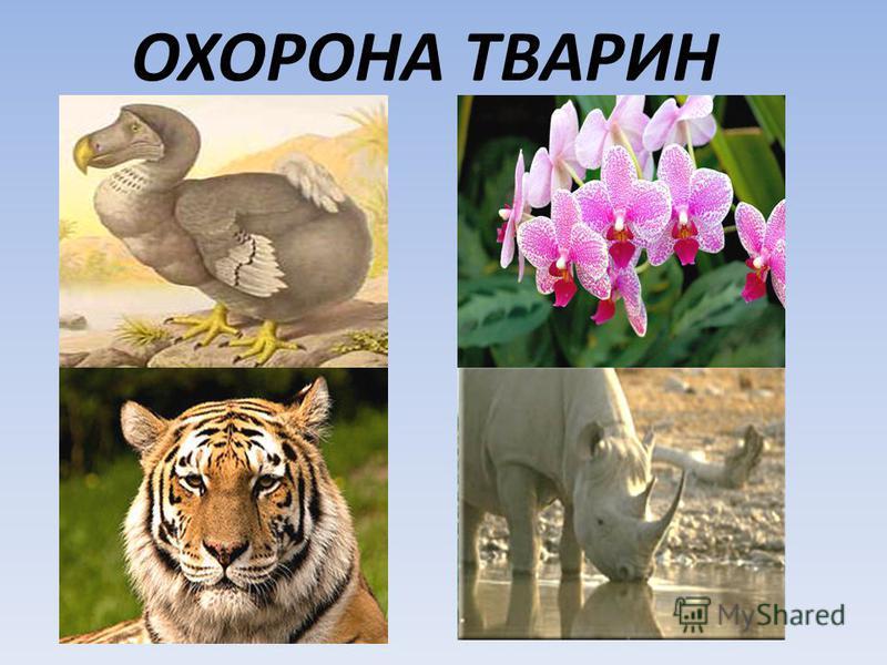 ОХОРОНА ТВАРИН