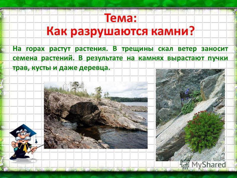 Тема: Как разрушаются камни? На горах растут растения. В трещины скал ветер заносит семена растений. В результате на камнях вырастают пучки трав, кусты и даже деревца.