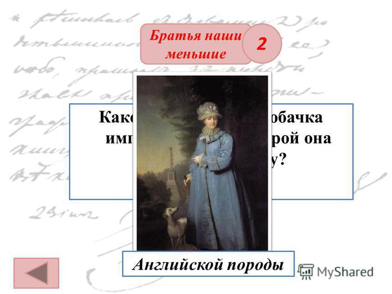 ОТВЕТ Братья наши меньшие Какой породы была собачка императрицы, с которой она гуляла по парку? 2 Английской породы