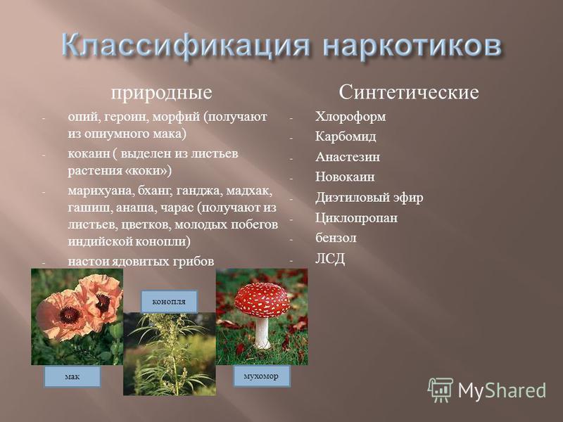 природные - опий, героин, морфий ( получают из опиумного мака ) - кокаин ( выделен из листьев растения « коки ») - марихуана, бханг, ганджа, мат как, гашиш, анаша, чарас ( получают из листьев, цветков, молодых побегов индийской конопли ) - настои ядо