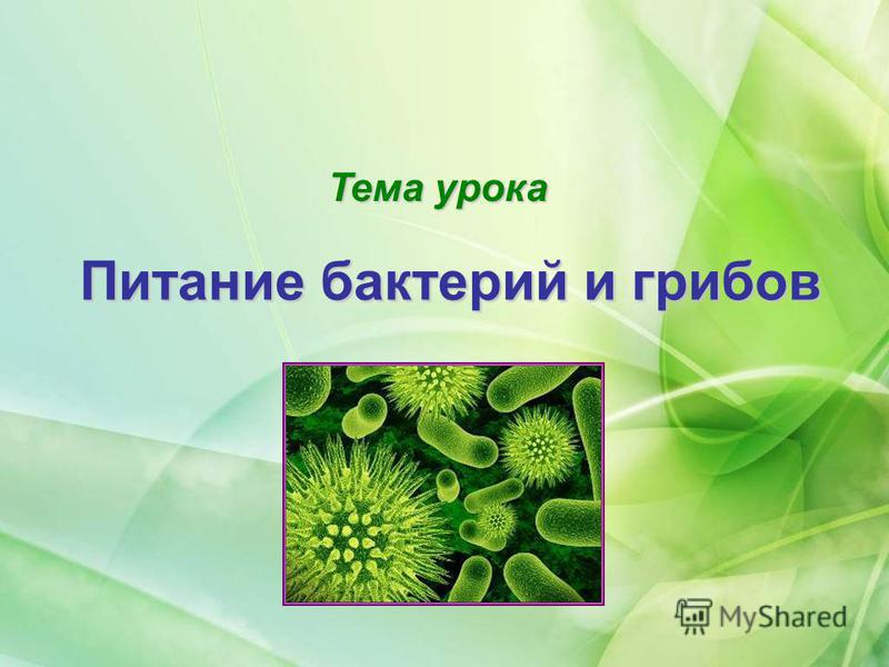Тема урока Питание бактерий и грибов