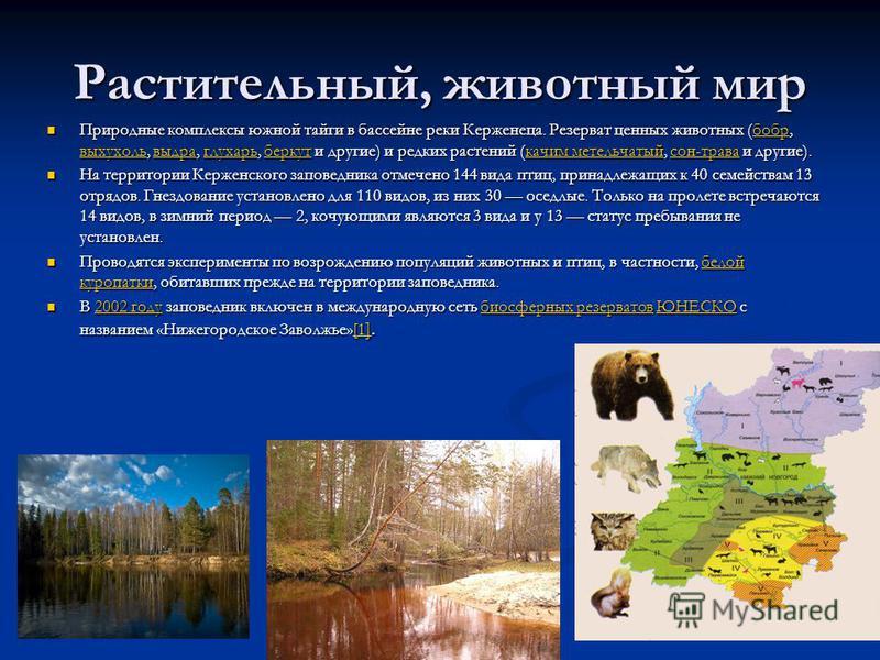 Растительный, животный мир Природные комплексы южной тайги в бассейне реки Керженеца. Резерват ценных животных (бобр, выхухоль, выдра, глухарь, беркут и другие) и редких растений (качим метельчатый, сон-трава и другие). Природные комплексы южной тайг