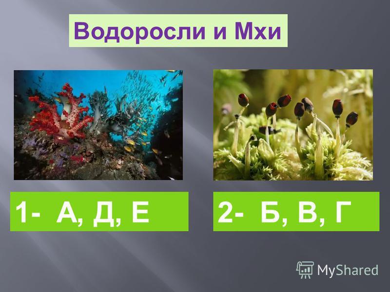 2- Б, В, Г Водоросли и Мхи 1- А, Д, Е