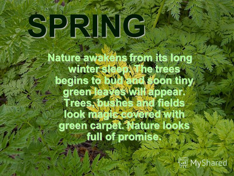 SPRING Nature awakens from its long winter sleep. The trees begins to bud and soon tiny green leaves will appear. Trees, bushes and fields look magic covered with green carpet. Nature looks full of promise.