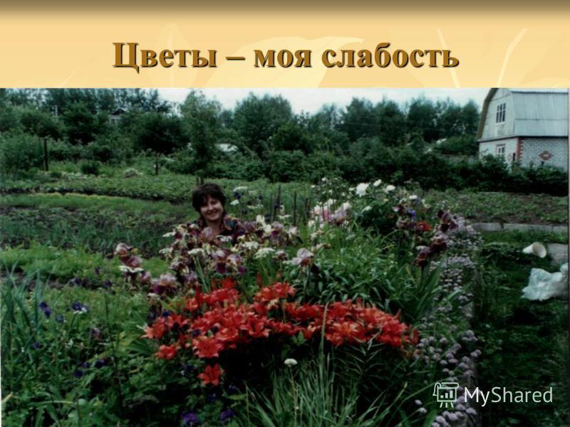 Цветы – моя слабость