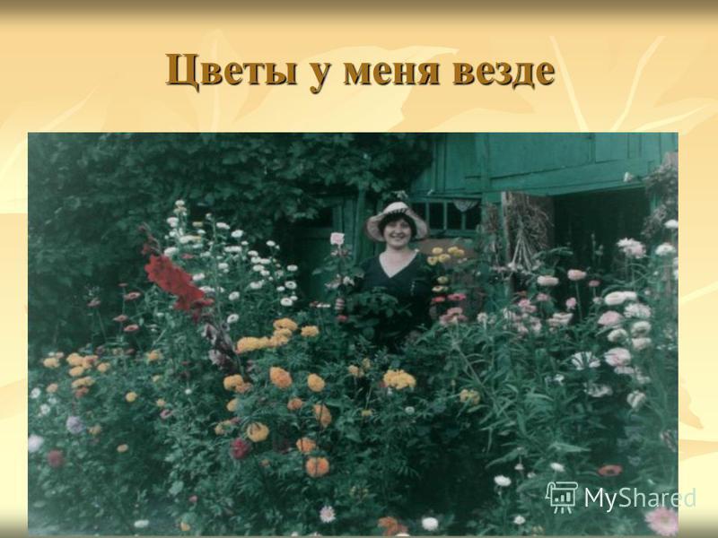 Цветы у меня везде