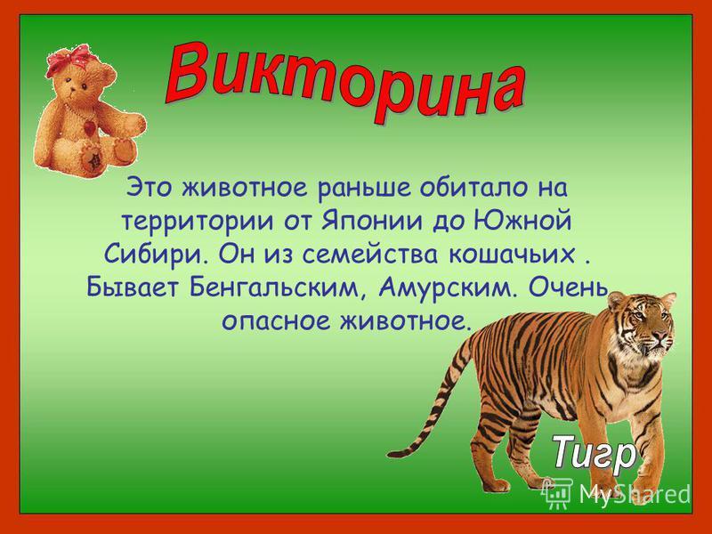 Это животное раньше обитало на территории от Японии до Южной Сибири. Он из семейства кошачьих. Бывает Бенгальским, Амурским. Очень опасное животное.