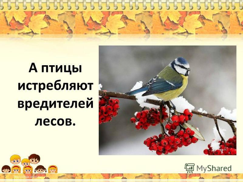 А птицы истребляют вредителей лесов.