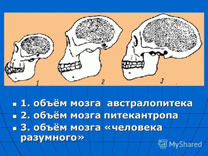 1. объём мозга австралопитека 1. объём мозга австралопитека 2. объём мозга питекантропа 2. объём мозга питекантропа 3. объём мозга «человека разумного» 3. объём мозга «человека разумного»