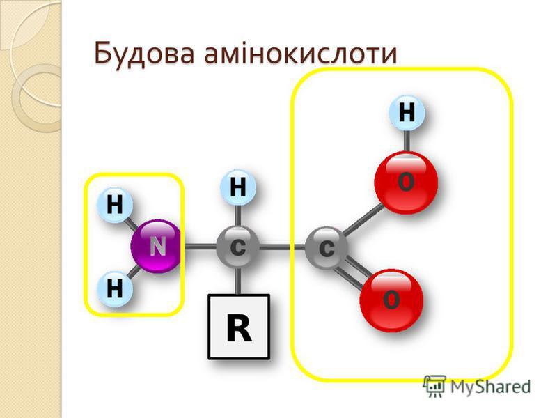 Будова амінокислоти