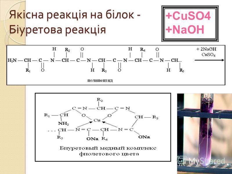 Якісна реакція на білок - Біуретова реакція +CuSO4 +NaOH