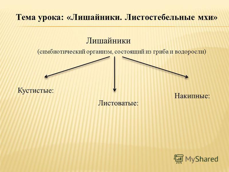 Тема урока: «Лишайники. Листостебельные мхи» Лишайники (симбиотический организм, состоящий из гриба и водоросли) Кустистые: Листоватые: Накипные: