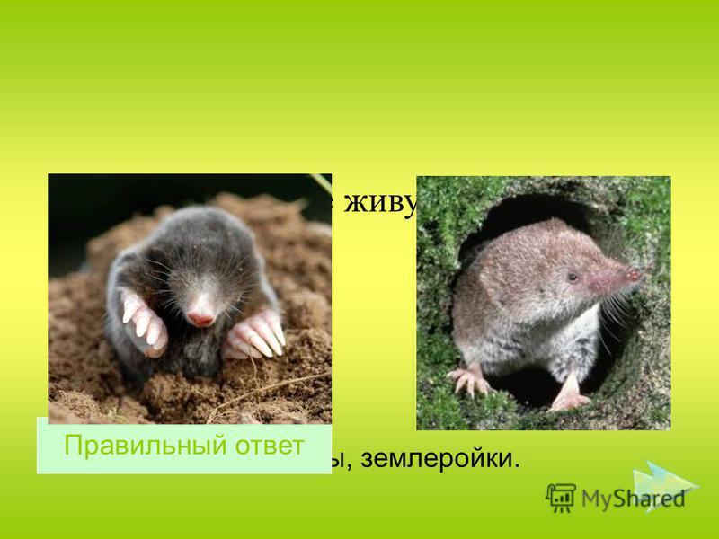 Какие животные живут под землёй ? Кроты, землеройки. Правильный ответ