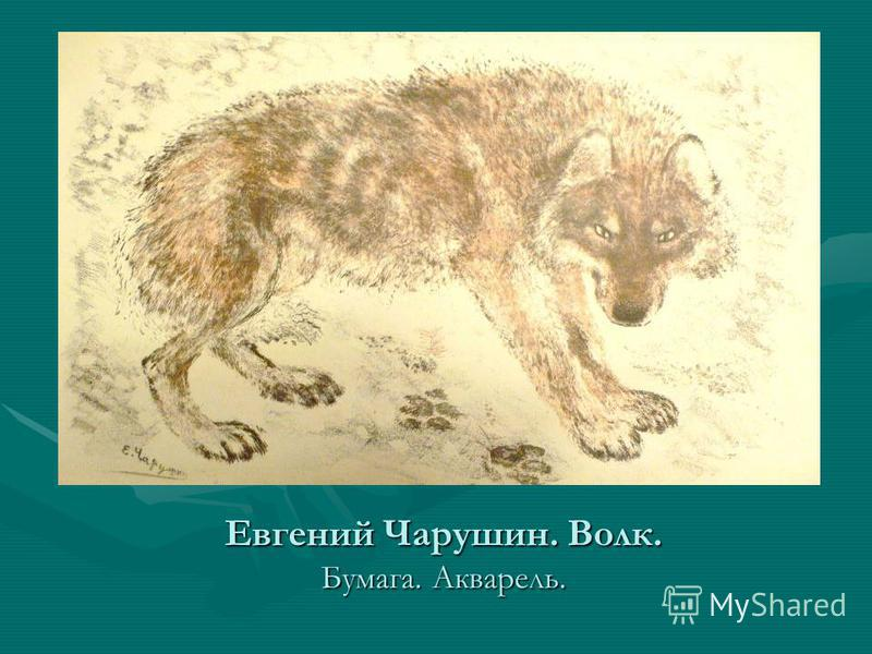Евгений Чарушин. Волк. Бумага. Акварель.