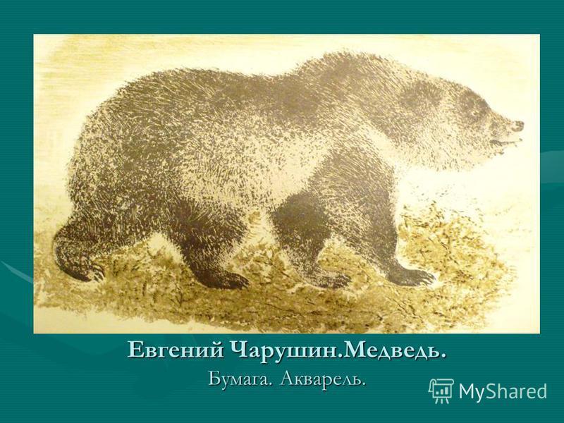 Евгений Чарушин.Медведь. Бумага. Акварель.
