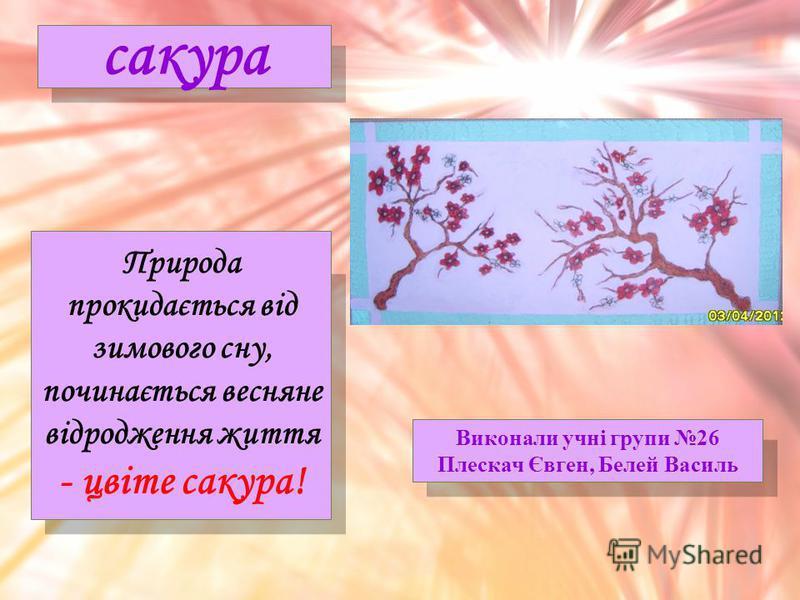 Виконали учні групи 26 Плескач Євген, Белей Василь сакура Природа прокидається від зимового сну, починається весняне відродження життя - цвіте сакура!