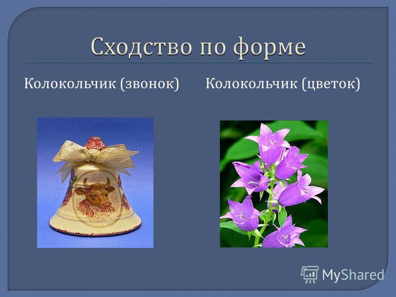 Колокольчик ( звонок ) Колокольчик ( цветок )