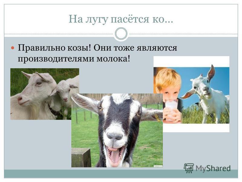 На лугу пасётся ко… Правильно козы! Они тоже являются производителями молока!