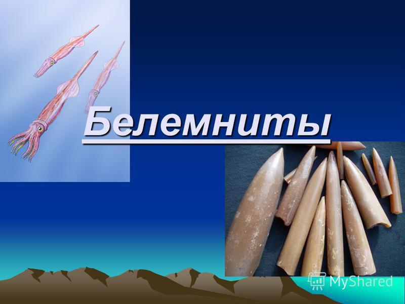 Белемниты
