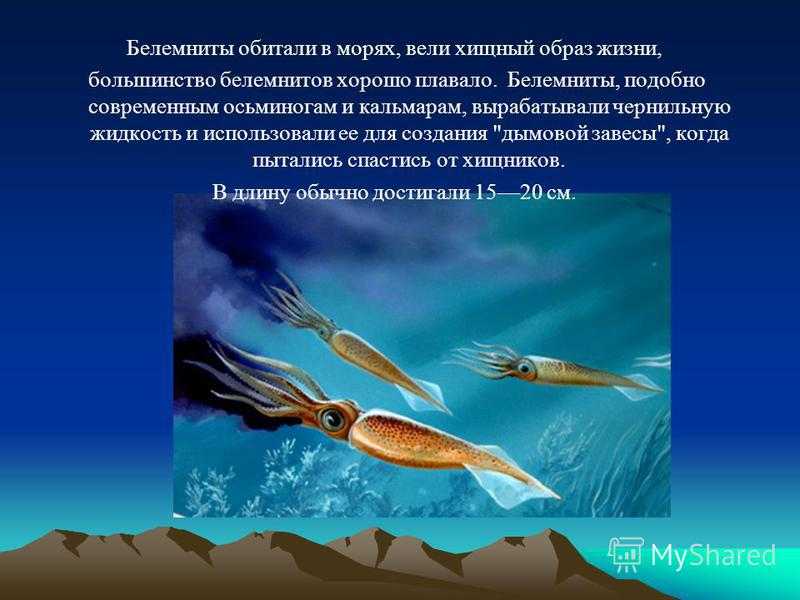Белемниты обитали в морях, вели хищный образ жизни, большинство белемнитов хорошо плавало. Белемниты, подобно современным осьминогам и кальмарам, вырабатывали чернильную жидкость и использовали ее для создания