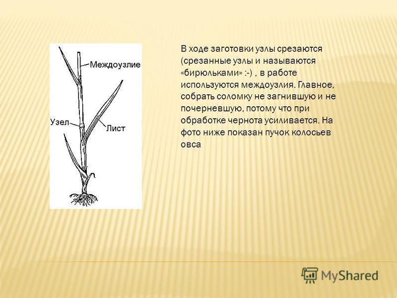 В ходе заготовки узлы срезаются (срезанные узлы и называются «бирюльками» :-), в работе используются междоузлия. Главное, собрать соломку не загнившую и не почерневшую, потому что при обработке чернота усиливается. На фото ниже показан пучок колосьев