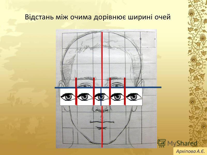 Відстань між очима дорівнює ширині очей