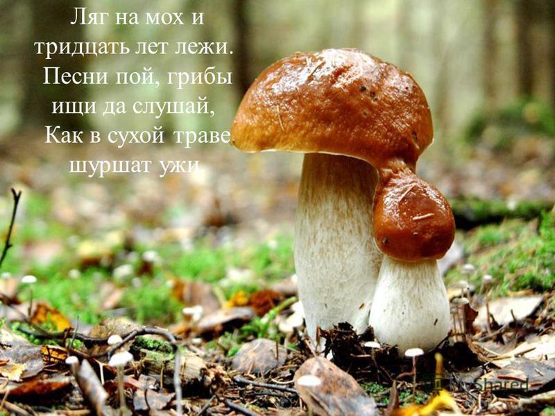 Ляг на мох и тридцать лет лежи. Песни пой, грибы ищи да слушай, Как в сухой траве шуршат ужи.