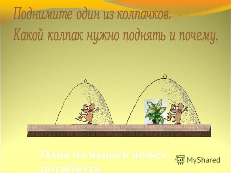 Возьмем двух мышек и накроем их колпаками, с одной мышкой поставим растение. Докажем, что без растений жизнь не возможна