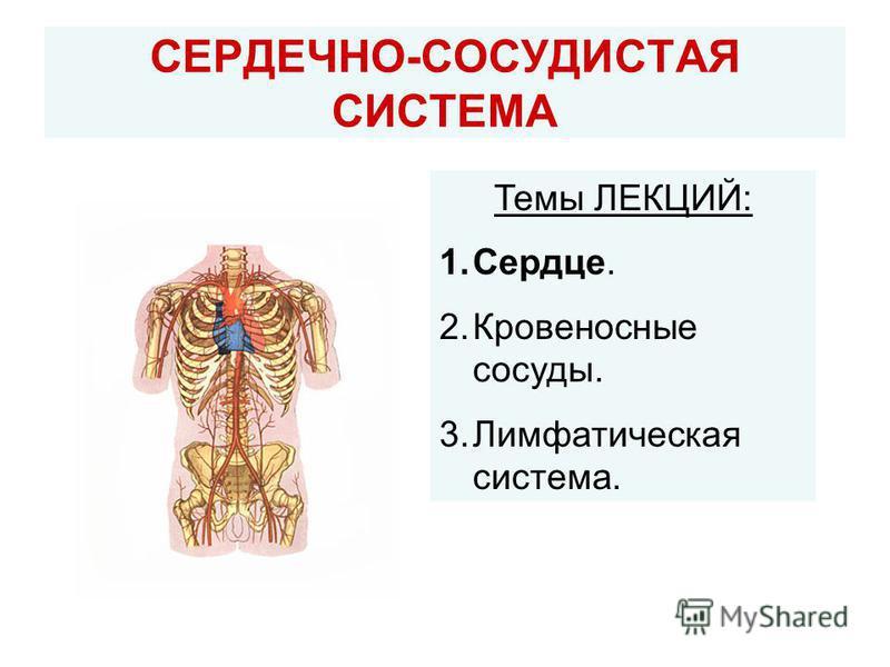 СЕРДЕЧНО-СОСУДИСТАЯ СИСТЕМА Темы ЛЕКЦИЙ: 1.Сердце. 2. Кровеносные сосуды. 3. Лимфатическая система.
