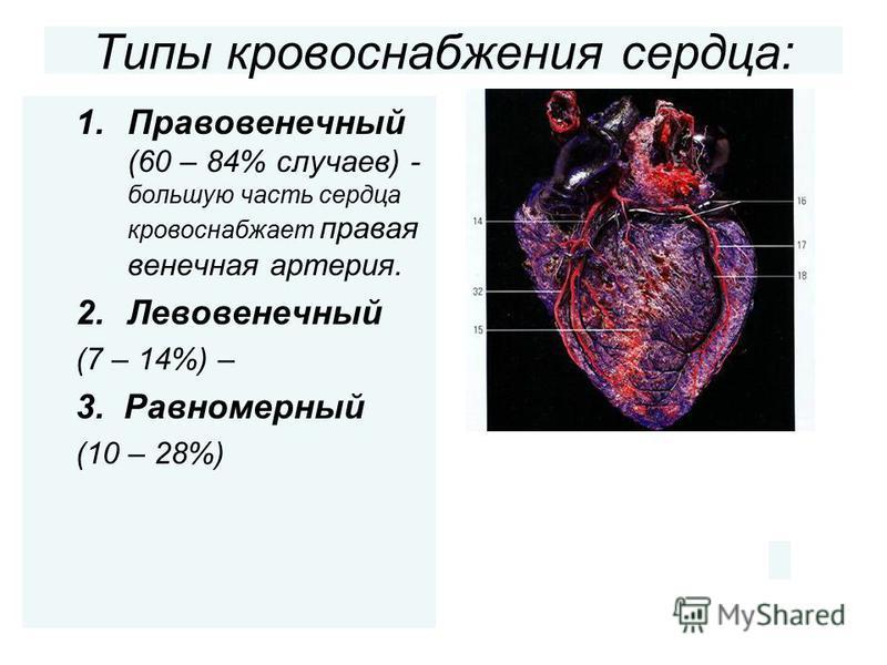 Типы кровоснабжения сердца: 1. Правовенечный (60 – 84% случаев) - большую часть сердца кровоснабжает правая венечная артерия. 2. Левовенечный (7 – 14%) – 3. Равномерный (10 – 28%)