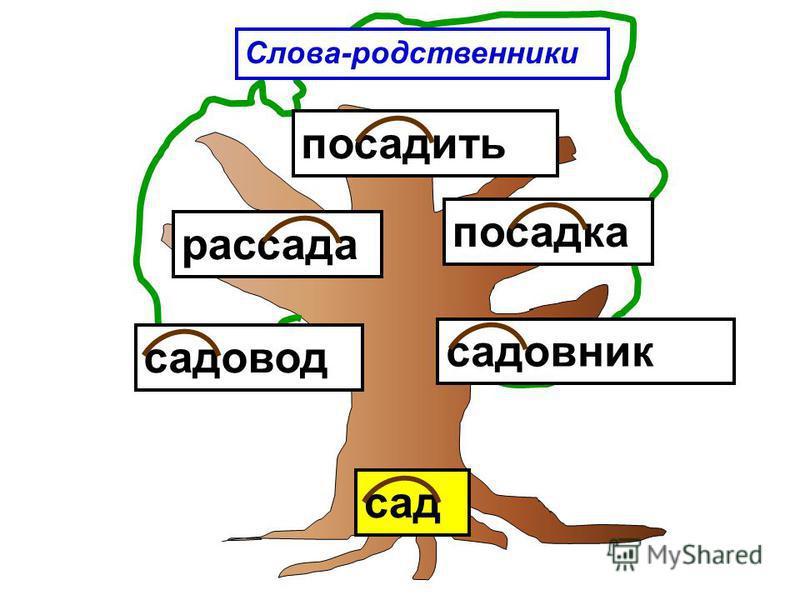 Слова-родственники сад садовник садовод посадка рассада посадить