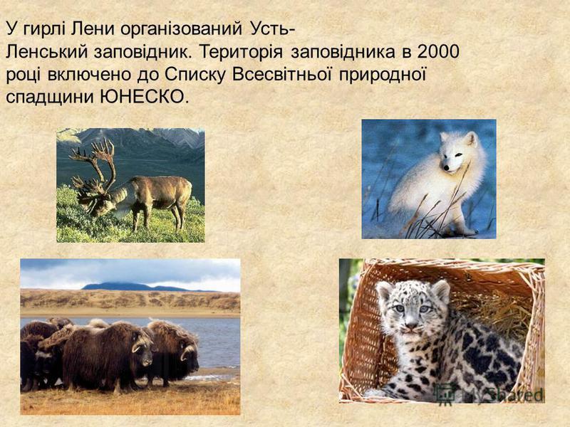У гирлі Лени організований Усть- Ленський заповідник. Територія заповідника в 2000 році включено до Списку Всесвітньої природної спадщини ЮНЕСКО.
