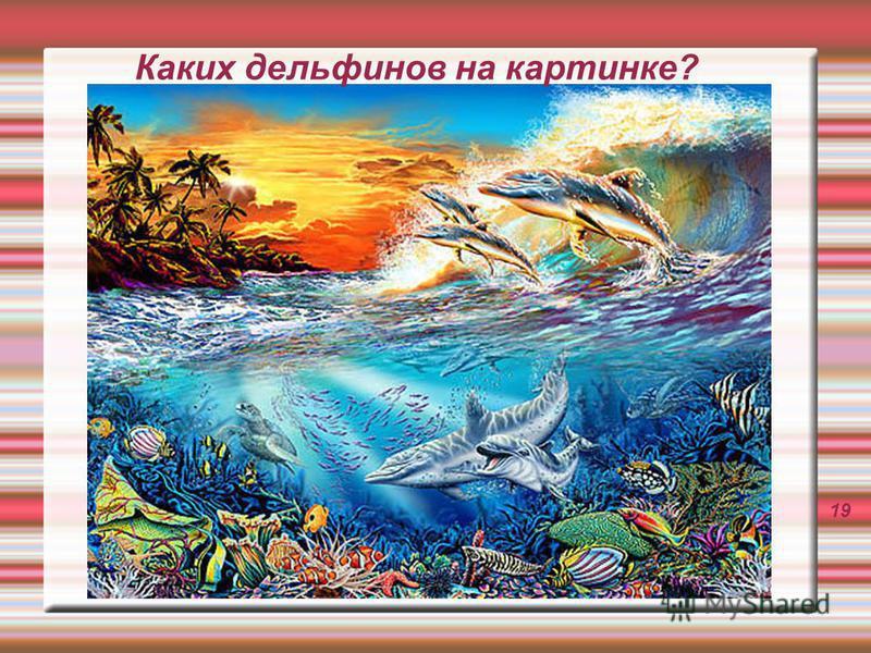 Каких дельфинов на картинке? 19