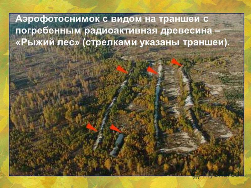 Погибший лес представлял собой значительную опасность, например при пожаре, как источник вторичного радиоактивного загрязнения. Кроме того, погибший лес значительно ухудшал радиационную ситуацию возле дороги, которая была одной из основных транспортн