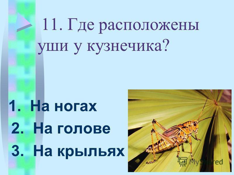 11. Где расположены уши у кузнечика? 1. На ногах 2. На голове 3. На крыльях